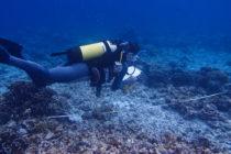 ¡Revelador! Científicos estuvieron equivocados más de 20 años con la identidad de un pez en Florida