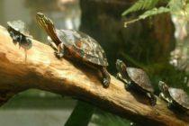 Ciudadano de Florida arrestado por dar amenazas de destrucción con ¡un ejército de tortugas!