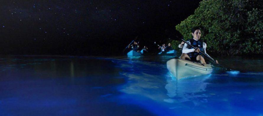 La Costa Espacial de Florida brilla bajo el efecto de la bioluminiscencia (FOTOS)