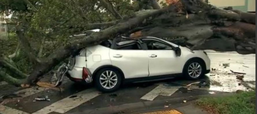 ¡De milagro! Familia se salvó de morir aplastada por un árbol en Miami