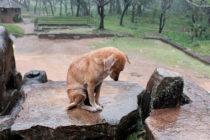 Serán multados todos los dueños que abandonen a sus mascotas durante un huracán