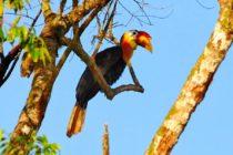 Nació ave en peligro de extinción en zoológico de Brevard