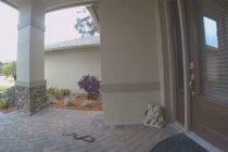 ¡Susto! Repartidor de Amazon fue recibido por dos serpientes en una casa en Florida (Video)
