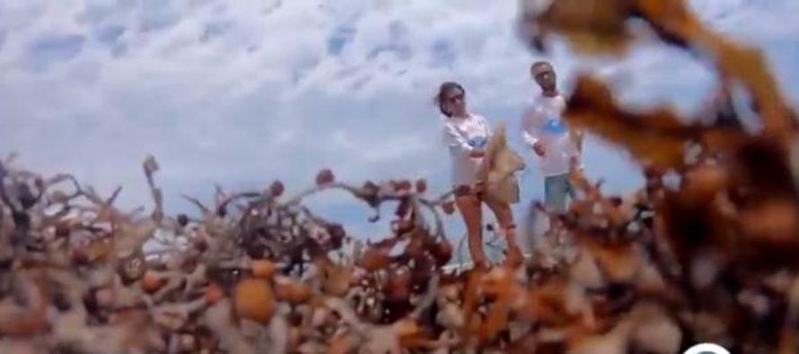 ¡Ejemplo a seguir! Dos amigos ambientalistas se encuentran limpiando playas de Florida