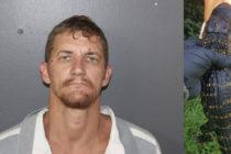 ¡Solo en Florida! Arrestaron a hombre por llevar un caimán en el asiento del copiloto de su auto