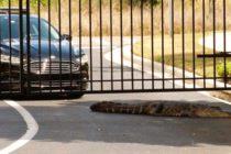¡Susto! Atraparon a un caimán que asediaba una parada escolar en Florida (+Video)