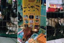China continúan vendiendo murciélagos para comer pese al peligro sanitario por el coronavirus