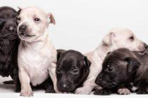 Reportan 30 personas infectadas por un brote contraído por contacto con cachorros