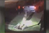 Autoridades sacaron a caimán de 8 pies de una alcantarilla en Cape Coral