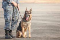 Agente canino descubrió un paquete de cocaína en el Aeropuerto Internacional de Miami