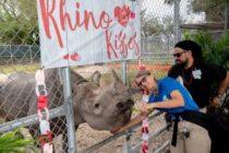 En el Zoo de Miami celebran el cumpleaños 43 de «Toshi», el rinoceronte negro con más edad de Estados Unidos