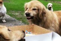 Viral: El gracioso vídeo de un perro que no quiere compartir su torta de cumpleaños