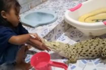 ¡Juego peligroso! Niña cepilla los dientes y maquilla a un cocodrilo en Indonesia (Video)