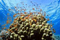 Corales de los Cayos de Florida fueron extraídos para salvarlos de bacteria