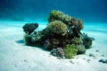 Arrecifes de coral del Mar Rojo serán protegidos por investigadores de Israel