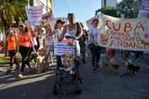 Cubanos manifestaron este domingo para exigir el fin del maltrato animal