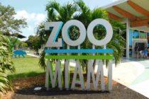 Cinco razones para visitar el Zoo Miami