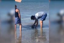 Residentes de los Cayos de Florida rescataron a bebé delfín (Video)