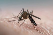 Aumento de dengue en República Dominicana puede influir en turismo en Miami