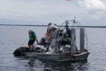 Cocodrilo fue capturado tras a perseguir a dos nadadores en Florida