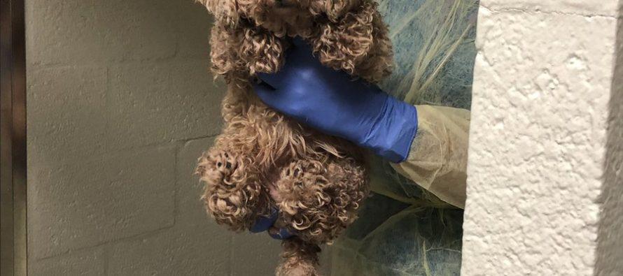 Rescatan a 50 perros de una casa en Palm Beach Gardens