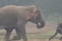 Elefante casi aplasta a turista que se acercó para tomarse una selfie (Video)