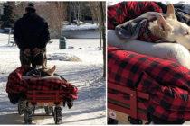 Un hombre que lleva a a pasear a su perrita en un carrito se hace viral