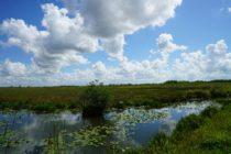 El Distrito de Gestión del Agua respalda el acuerdo para comprar 20.000 acres de los Everglades