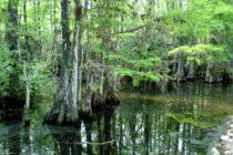 ¿Explotación petrolera en Florida? El estado adquirirá tierras de los Everglades para protegerlas
