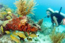 Florida Keys Sanctuary realizará plan para restaurar corales en $ 100 millones