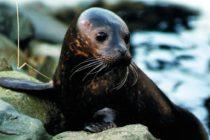 ¡Adorable! Así es la fotografía de una foca y un perro salchicha durante un paseo