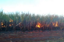 Acusan a trabajadores de sabotaje por incendios en centrales azucareros de Cuba