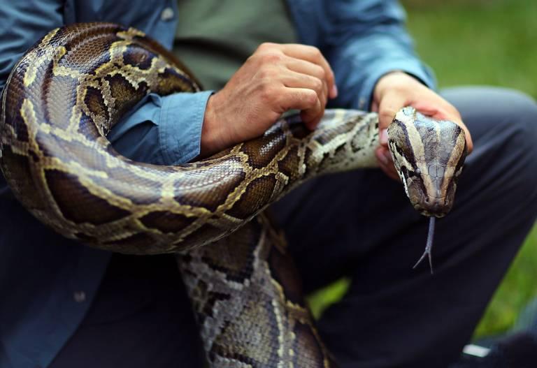 Buscar la manera de Atrapar serpientes