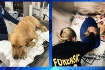 Perro policía es mordido por serpiente venenosa mientras busca a bebé desaparecido en Florida