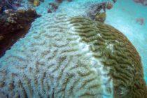La administración Trump consternada por la amenaza del cambio climático a los arrecifes de coral