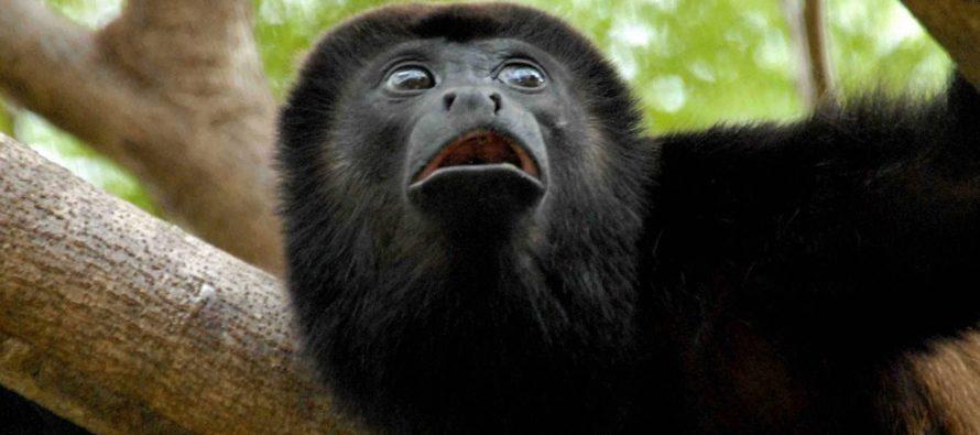 Mono tití amazónico valuado en $ 10.000 fue robado del zoológico de Palm Beach