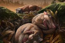 ¡Nuevo descubrimiento! Fósiles muestran cómo fue la evolución de la audición en mamíferos