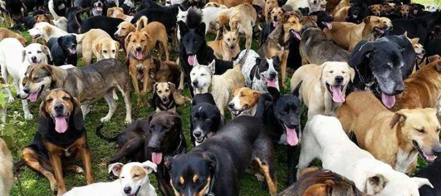 ¡Conmovedor! El refugio que se dedica a salvar perros abandonados en Miami-Dade