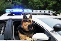 Ley endurecería sanciones por herir a perros policías en Florida