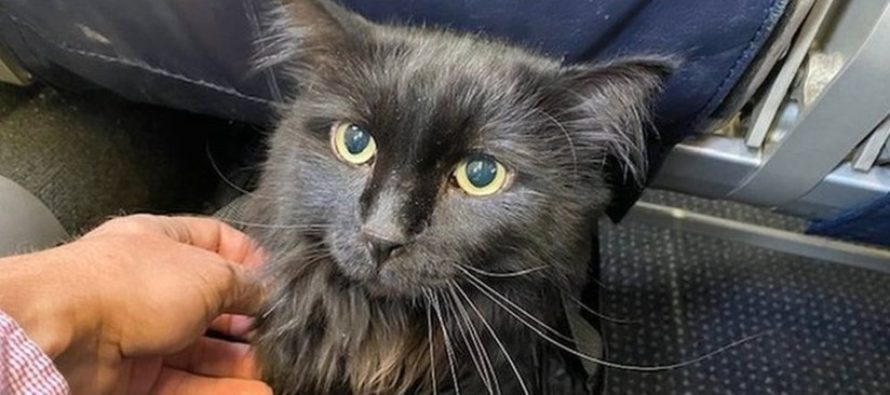 ¡Increíble! Dueño encontró a su gata tras 5 años y 2.000 km de recorrido