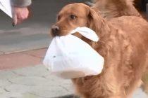 Conoce a Sunny el perrito que ayuda a su vecina de la tercera edad llevándoles las compras