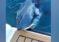 ¡Susto! Biólogo marino grabó momento que tiburón atacó su yate sin piedad (Video)