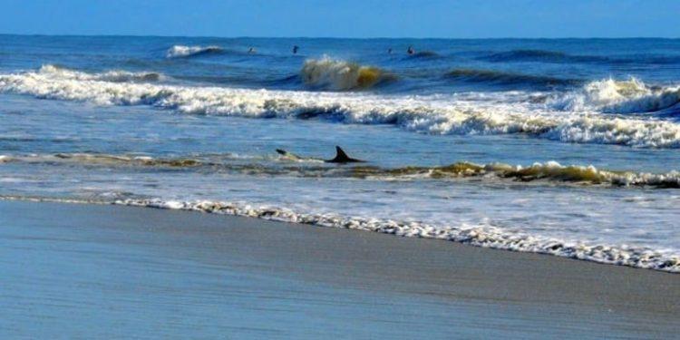 Dos tiburones atacaron a un niño y un hombre en playa de Florida