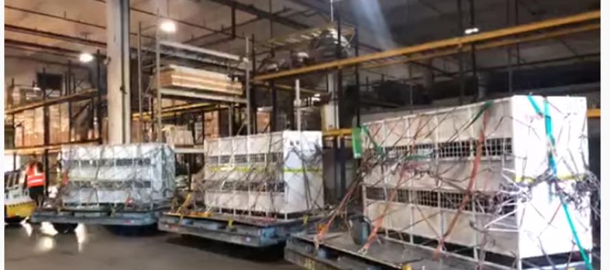 Tres tigres rescatados de circo Guatemalteco aterrizaron en el MIA
