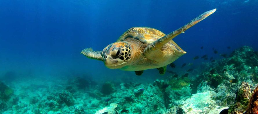 Florida actualizó su conteo de nidos de tortugas marinas en 2018