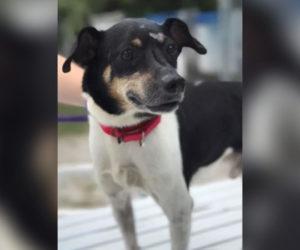 Zippy, el perro héroe de Florida que sacrificó su vida para salvar a su familia de un incendio