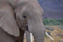 Elefante del Zoológico de Miami murió tras enfrentamiento con otro