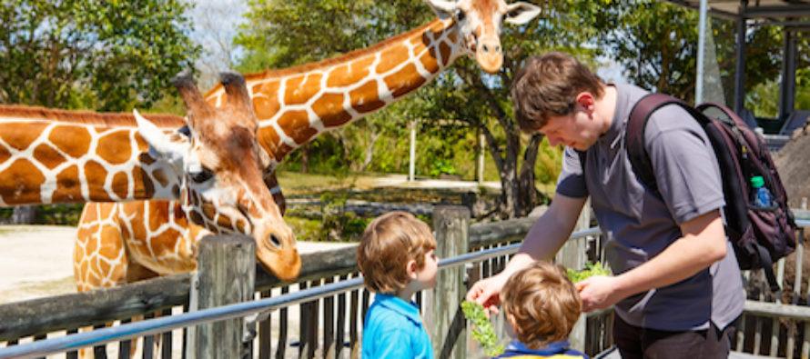 Entrada gratis al zoológico de Miami a cambio de teléfonos viejos