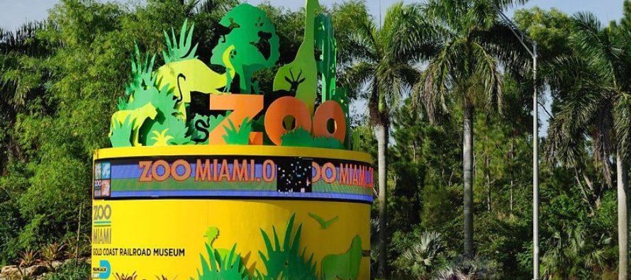 Zoológico de Miami será el anfitrión de un evento para recaudar fondos con arte hecho por animales