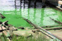 Buscan enfrentar baja calidad hídrica en Florida con Ley de Aguas Limpias